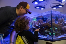Josh and Katelyn Allen view clownfish in the University Center at the ASU Open Door event on the Downtown Phoenix campus.